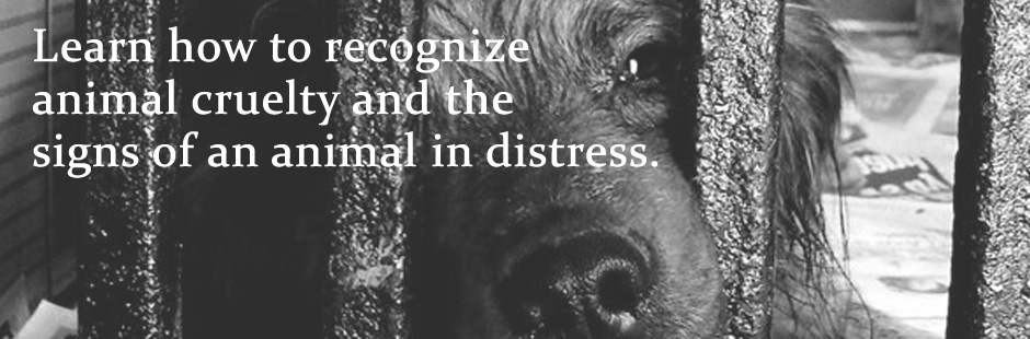 Recognize animal cruelty
